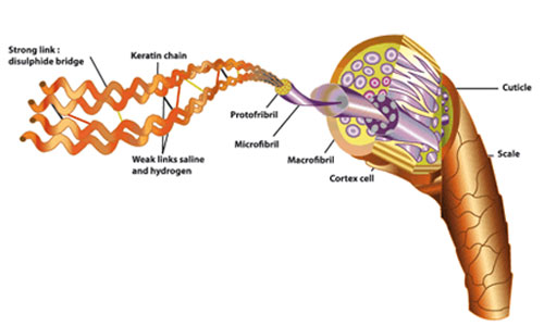 Keratin molekylet